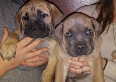 Daedalus-and-Cara-as-pups