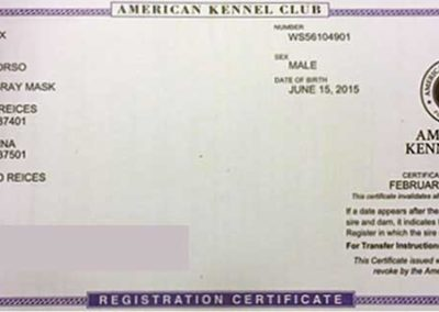 King-Rex-AKC-Registration-Certificate