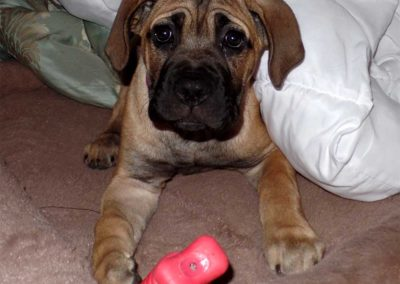 Cara-puppy-8