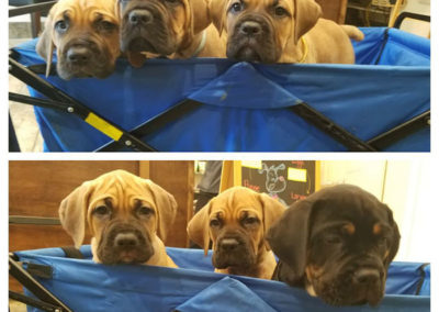 How-adorable-are-puppies-in-a-basket-