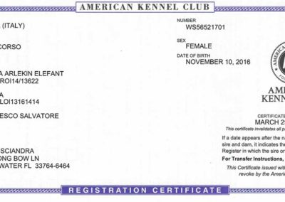 AKC-registration-certificate-for-Amber