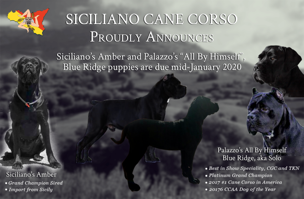 Siciliano's Amber and Palazzos Annoumcement
